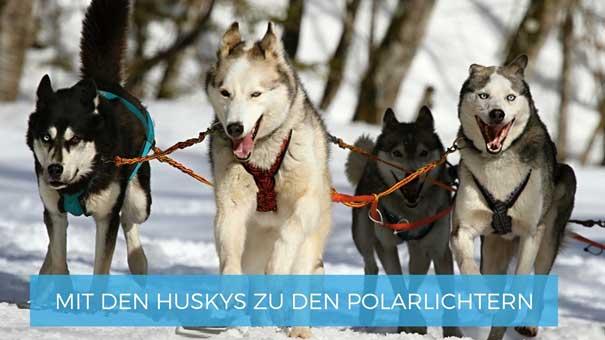 Mit den Huskys zu den Polarlichtern